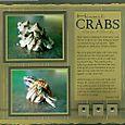 Hermit_crabs
