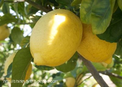 Lemon Cordial 1